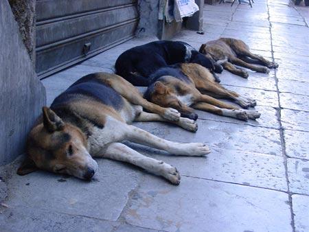 Gossos dormint