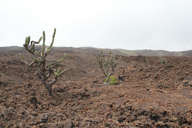 Zona volcànica prop del Sierra Negra