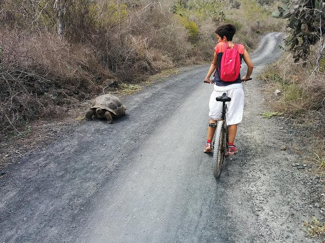 Tortuga i Ari en bici